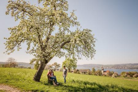 Konstanz Fruehling (Bildnachweis MTK Dagmar Schwelle)