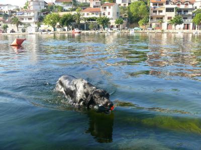Tierischer Ferienspass - so bringen Sie Ihren Hund gut durch die Urlaubszeit