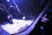 Reinigung der Aquarien im SEA LIFE Konstanz