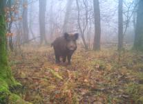 4. EuroBoar-Treffen am Nationalpark Hainich