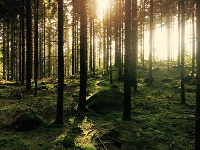 Nachhaltigkeit durch den natürlichen Baustoff Holz