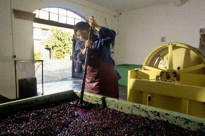 Konzentration im deutschen Weinbau