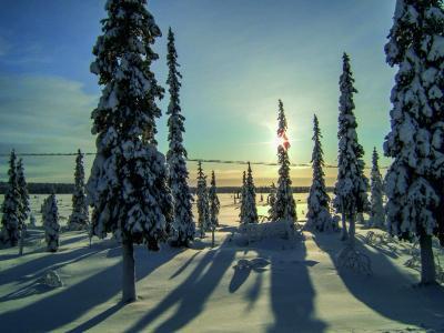 Verschneite Bäume © Mike Bohle