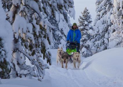 Mit den Hunden durch Schwedisch Lappland © Dirk Schwarz