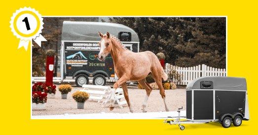 Humbaur Pferdeanhänger – optimal für den sicheren Transport von Stute und Fohlen