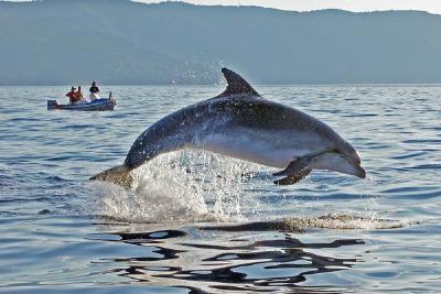 Citizen-Science hilft, Delfine zu schützen.