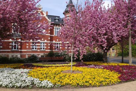 Blütenpracht (c) Tourist-Information Lutherstadt Wittenberg