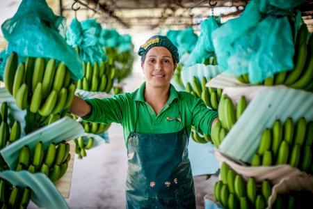 Nach aktuellen Studienergebnissen profitieren Fairtrade-zertifizierte Bananenproduzenten wie APPBOSA in Peru von nachhaltiger finanzieller Stabilität