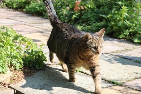 Katzen reinholen für den Vogelschutz / Bild: Dipl. Biol. Dr. Wolfgang Dennhöfer