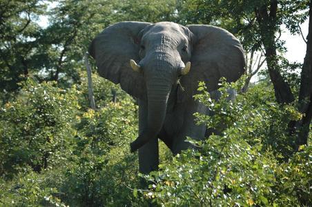 Erlebnisreise Botswana_Namibia mit Zelt