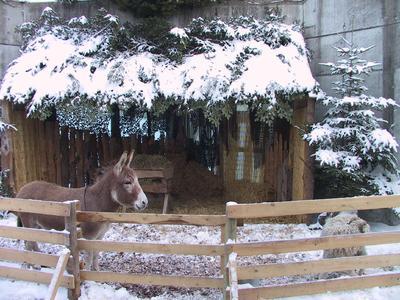 Lebendige Krippe im Walter Zoo Gossau
