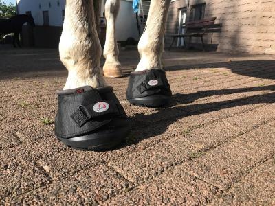 Der Cavallo für die Kaltblüter.