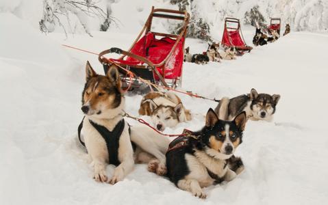 Finnland Lappland Hundeschlittentouren