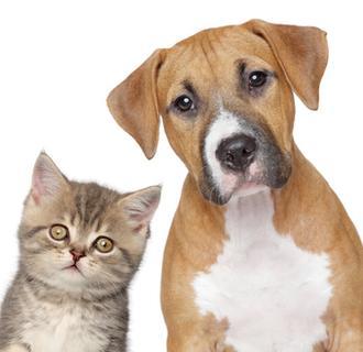 tierische wg mitbewohner katzen und hunde sind die. Black Bedroom Furniture Sets. Home Design Ideas
