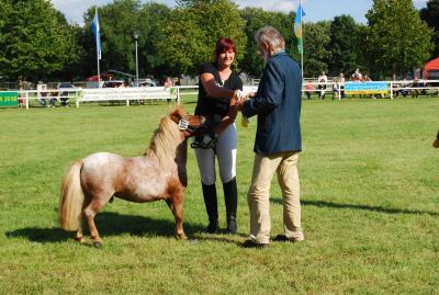 Erstplatzierter Mini-Shetty-Hengst Lou mit pro agro Vorstandsmitglied Dr. Ralf Ruhnau